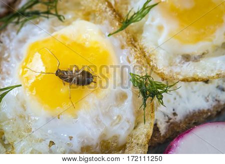 Cockroach in dish with scrambled eggs