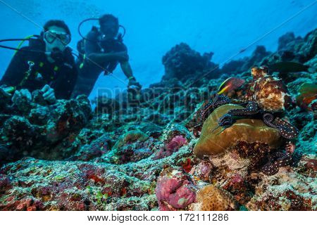 Two scuba divers exploring coral reef with octopus, Maldives atolls, Indian Ocean.