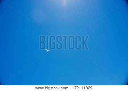 A gull flying in the clear blue sky under the shining sun