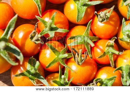 Small red tomatoes. Macro image small depth of field.