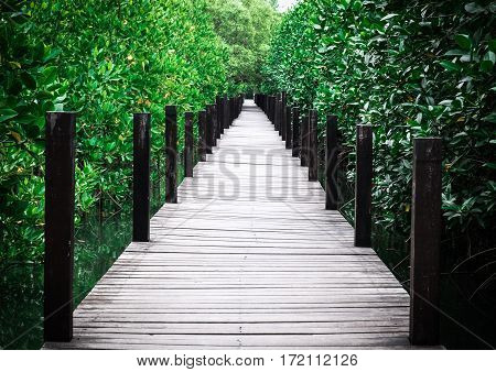 Wooden walk way in green forest in one point perspective view.