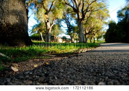 Low-angle natural background with trees and grass