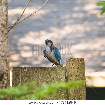 Blue And White Bird Standing On Wooden Fence