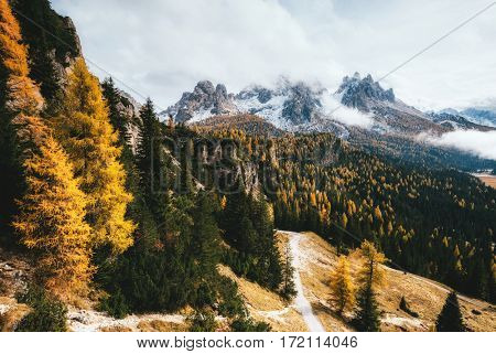 Great view of the yellow larches. Dramatic and gorgeous scene. Location National Park Tre Cime di Lavaredo, Misurina, Dolomiti alp, Tyrol, Italy, Europe. Vintage style. Instagram effect. Beauty world.