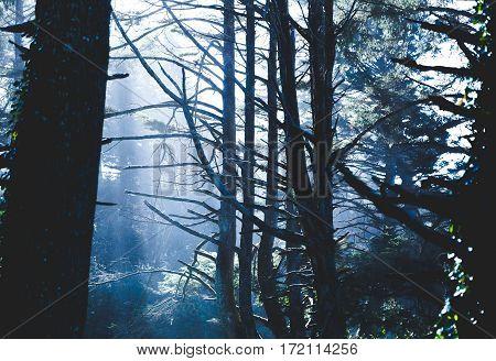 Misty Forest Sunlight