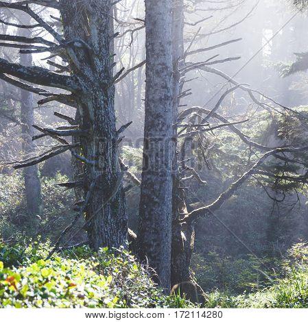 Hazy Forest Light
