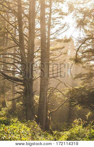 Hazy Sunlight In Coastal Forest