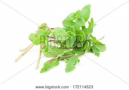 a Fresh green mint isolated on white