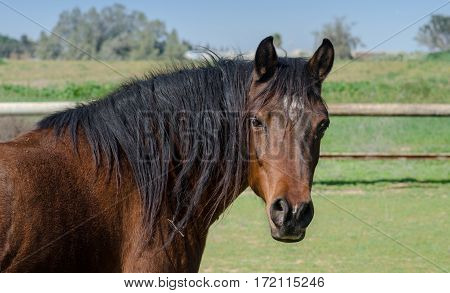 Brown Horse With Black Mane Stands On A Green Field