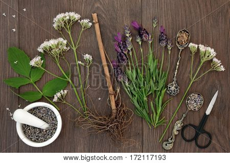 Lavender and valerian herb flowers and root with mortar and pestle, over oak background. Used  in natural alternative medicine.
