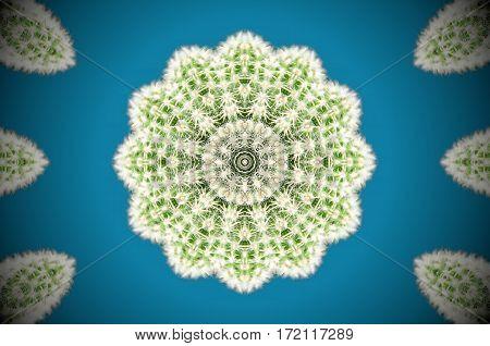 Abstract Cactus Mirror