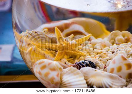 seashells and starfish with pebbles in little bowl aquarium filled with water without fish