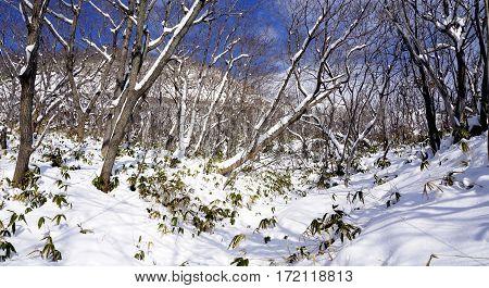 Snow In The Forest Noboribetsu Onsen Snow Winter