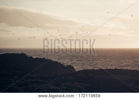 Flock Of Birds Fly Over Grey Sea In Evening
