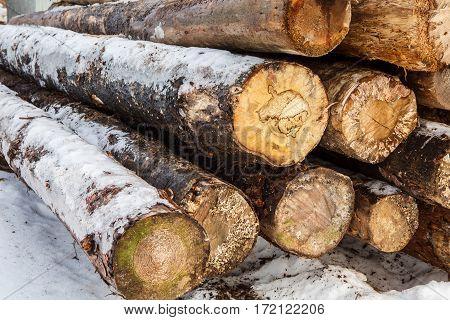 Felled tree trunks covered with snow. Stacks of sawn woods.  Industrial logging of pine trees. Nature is used by people.