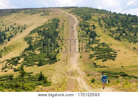 Spruce fir forest in the Ukrainian Carpathians. Sustainable clear ecosystem. Direction.