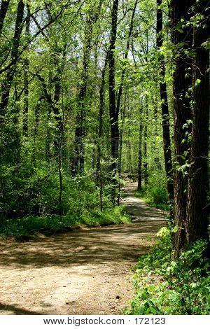 Curvy Forest Trail