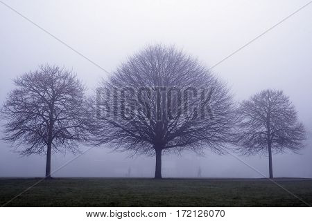 Three trees in the mist with 2 walkers silhouetted between them