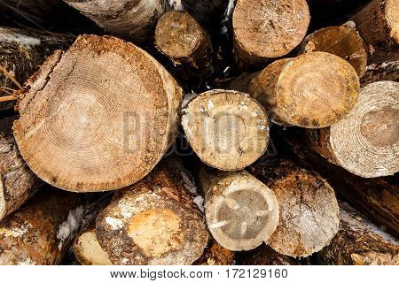 Felled tree trunks in winter. Stacks of sawn woods.  Industrial logging of pine trees. Nature is used by people.