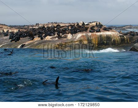 SEAL ISLAND, CAPE TOWN SOUTH AFRICA