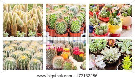 Image cactus desert plant on white background