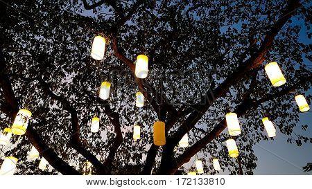 light of paper lantern decorating on tree at night