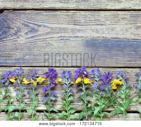 wildflowers on a wooden surface.the unpretentious rustic background.toned