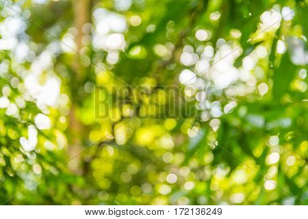 background and texture of blurred bokeh tree leaf