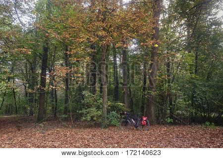 Monza (Brianza Lombardy Italy) : the park in autumn. A bicycle with red bags