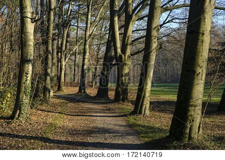 Monza (Brianza Lombardy Italy): the park at december (late fall)