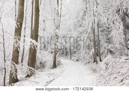 Forest path in winter scenery. Poland .