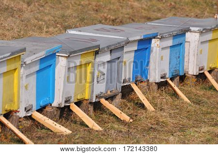 Row of colorful wooden beehives in wintertime