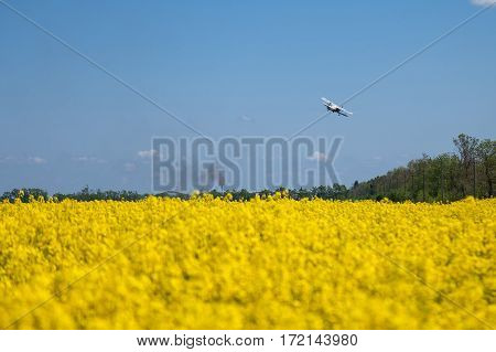 Rapeseed field. Rapes on the field in summer. The agriculturial aeroplane sprays pesticides on the rapes field.