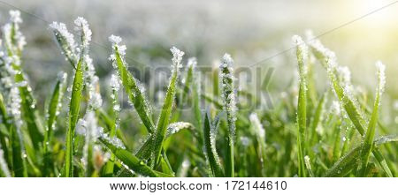 Ice crystals on green grass close up. Nature background.