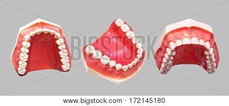 Set of close up dental model denture dentoform. Isolated.