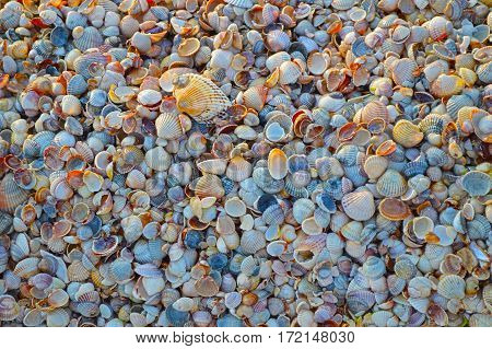 Seashells background under the sunset light. A lot of multicolored seashells piled together