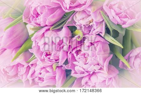 Pink tulips. Pastel style