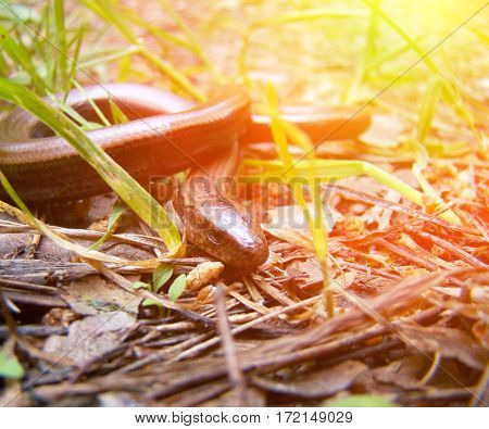 Snake Hunts For Prey, Close-up