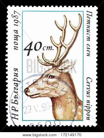 BULGARIA - CIRCA 1987 : Cancelled postage stamp printed by Bulgaria, that shows Sika Deer.