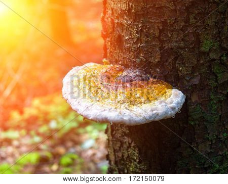 Mushroom On A Moss In The Wood.