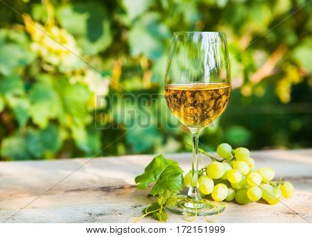 Green Grape And One Glass Of White Wine In The Vineyard