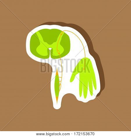paper sticker on stylish background reflex arc