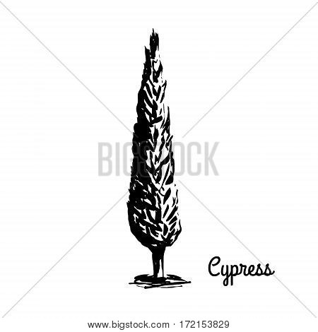 Vector sketch illustration. Black silhouette of Cypress isolated on white background. Mediterranean flora. Coniferous tree.