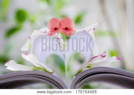 Petals & pistil of Eustoma russellianum flower & heart shape which made by white paper notebook. Clear bright nature background
