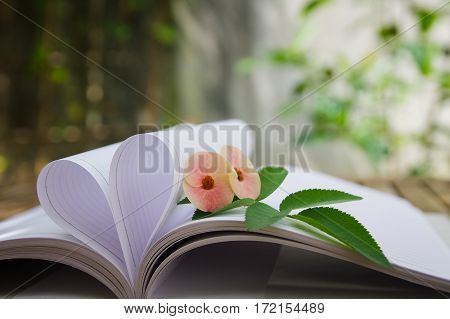 Couple of Crown-of-thorns flower and rose leaves with heart shape which made by white paper notebook. Clear bright nature background