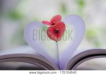 Couple of small Crown-of-thorns flower on heart shape which made by white paper notebook. Clear bright nature background