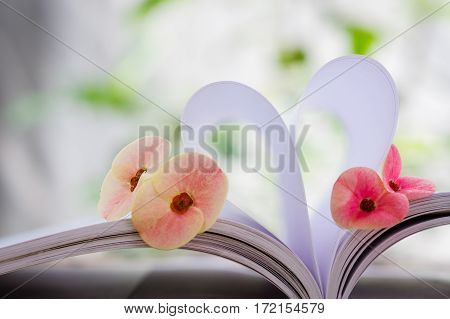 Double Couple of Crown-of-thorns flower beside heart shape which made by white paper notebook. Clear nature background