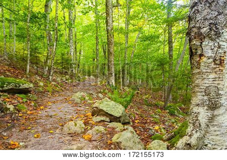 A dirt path through the trees in the forest