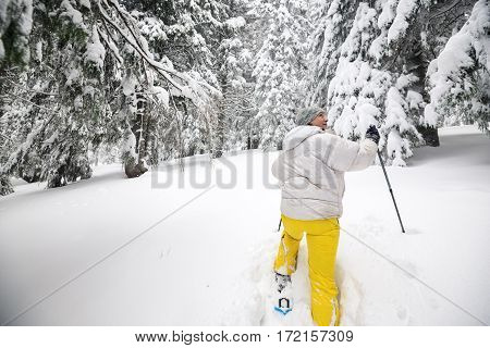 Woman Hiker Goes On Snowshoes On The Coniferous Forest
