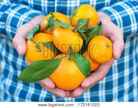 Mandarins In The Hands Of A Man